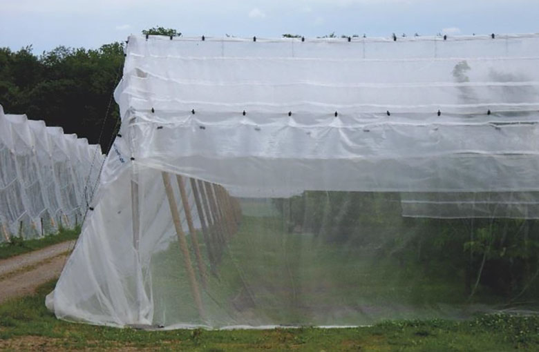 Insect nets - fruit cover Netten